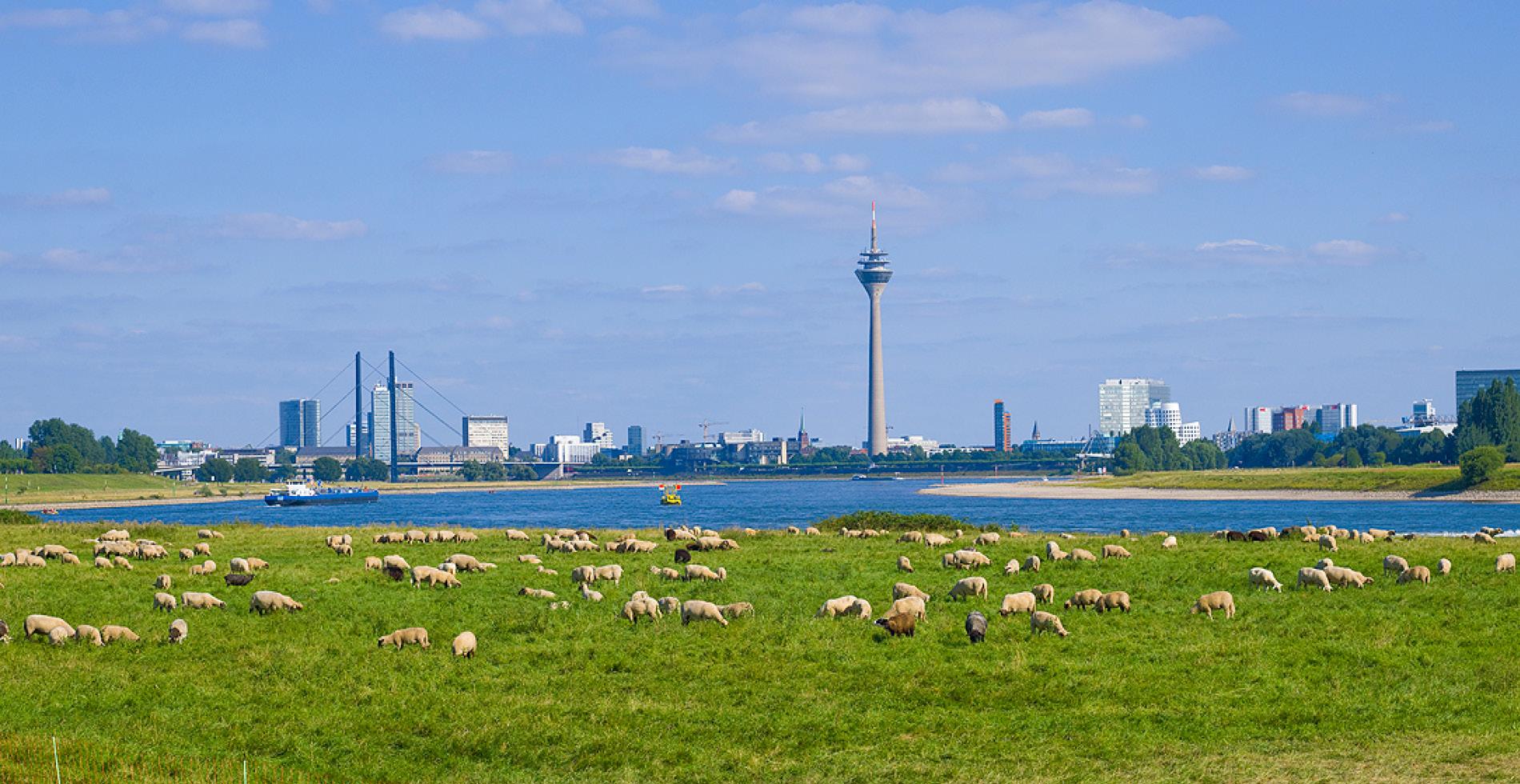 Standort für das Standortmarketingkonzept für das Wohnquartier Rhein VII in Düsseldorf