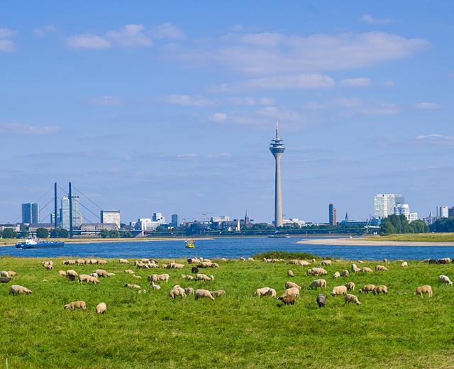 Duesseldorf Standort für das Standortmarketingkonzept für das Wohnquartier Rhein VII in Düsseldorf